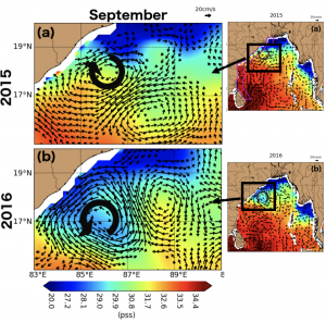 Figure 2: Geostrophic currents computed from sea level anomalies overlaid on sea surface salinity in September 2015 and 2016. A cyclonic eddy around 18°N carries the freshwater plume further south along the coast in September 2016 than in September 2015, when an anticyclonic eddy prevents the transport.